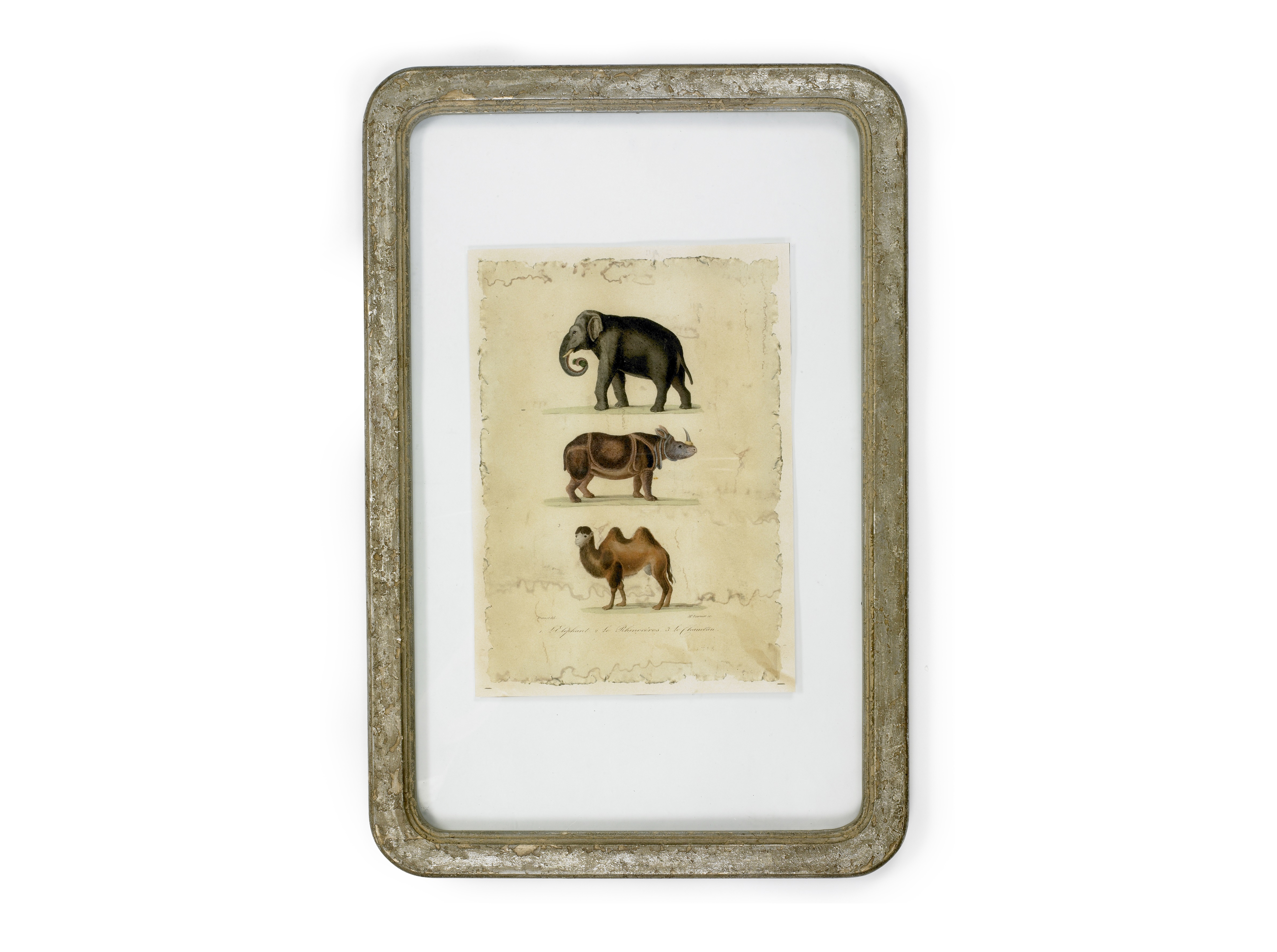 Иллюстрация AnimalsКартины<br><br><br>Material: Металл<br>Width см: 40<br>Depth см: 3<br>Height см: 60