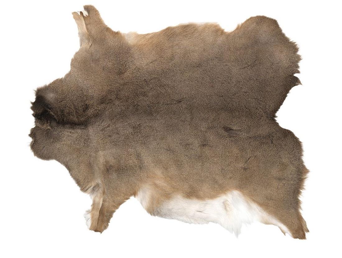 Шкура оленя
