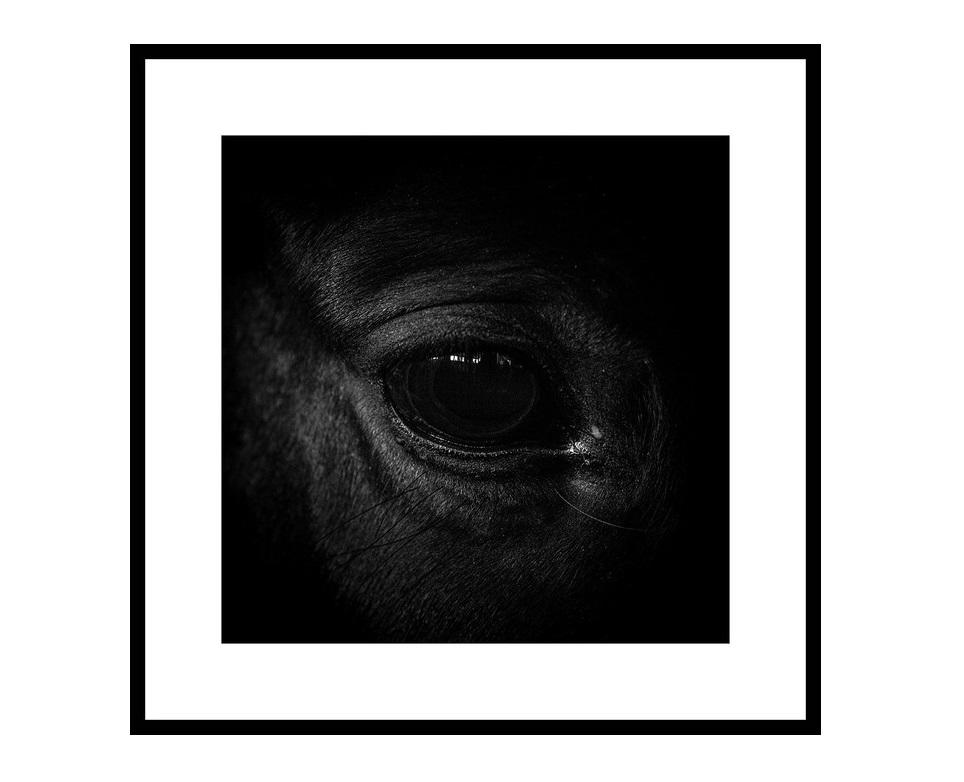 Авторский постер The Eye of the BeholderПостеры<br>&amp;lt;div&amp;gt;Для меня лошади - как большие коты. Красивые и независимые. То, что они иногда позволяют нам с собой делать, я могу объяснить только человеческой жестокостью, или их великодушием. Заглядывая им в глаза, думаешь, что это - камеры наблюдения, через которые какой-то высший инопланетный разум смотрит на нас с опаской и удивлением. Но иногда с радостью. И тогда кажется, что у человечества еще есть шанс.&amp;amp;nbsp;&amp;lt;/div&amp;gt;&amp;lt;div&amp;gt;Георгий Мордвин&amp;lt;/div&amp;gt;&amp;lt;div&amp;gt;&amp;lt;br&amp;gt;&amp;lt;/div&amp;gt;&amp;lt;div&amp;gt;&amp;lt;span style=&amp;quot;color: rgb(67, 68, 64);&amp;quot;&amp;gt;Тираж: 300 экз. С авторской подписью. Рама и паспарту включены в стоимость.&amp;amp;nbsp;&amp;lt;/span&amp;gt;За указанную стоимость размер на выбор: 40х40 см. или 60х60 см.&amp;lt;/div&amp;gt;&amp;lt;div&amp;gt;&amp;lt;br&amp;gt;&amp;lt;/div&amp;gt;&amp;lt;div&amp;gt;Срок поставки 3-5 рабочих дней с момента оформления заказа.&amp;lt;/div&amp;gt;<br><br>Material: Бумага<br>Length см: None<br>Width см: 40<br>Height см: 40