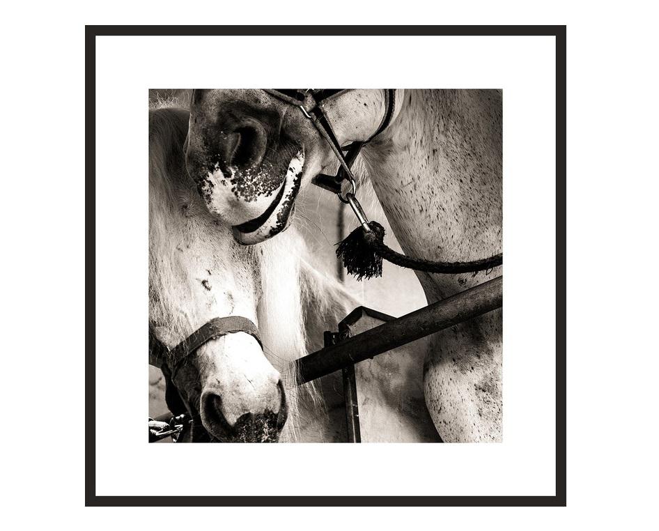 Авторский постер Чужая белая и рябойПостеры<br>&amp;lt;div&amp;gt;Для меня лошади - как большие коты. Красивые и независимые. То, что они иногда позволяют нам с собой делать, я могу объяснить только человеческой жестокостью, или их великодушием. Заглядывая им в глаза, думаешь, что это - камеры наблюдения, через которые какой-то высший инопланетный разум смотрит на нас с опаской и удивлением. Но иногда с радостью. И тогда кажется, что у человечества еще есть шанс.&amp;amp;nbsp;&amp;lt;/div&amp;gt;&amp;lt;div&amp;gt;Георгий Мордвин&amp;lt;/div&amp;gt;&amp;lt;div&amp;gt;&amp;lt;br&amp;gt;&amp;lt;/div&amp;gt;&amp;lt;div&amp;gt;&amp;lt;span style=&amp;quot;color: rgb(67, 68, 64);&amp;quot;&amp;gt;Тираж: 300 экз. С авторской подписью. Рама и паспарту включены в стоимость.&amp;amp;nbsp;&amp;lt;/span&amp;gt;За указанную стоимость размер на выбор: 20х20 см. или 25x25 см.&amp;lt;br&amp;gt;&amp;lt;/div&amp;gt;&amp;lt;div&amp;gt;Срок поставки 3-5 рабочих дней с момента оформления заказа.&amp;lt;/div&amp;gt;<br><br>Material: Бумага<br>Length см: None<br>Width см: 25<br>Height см: 25