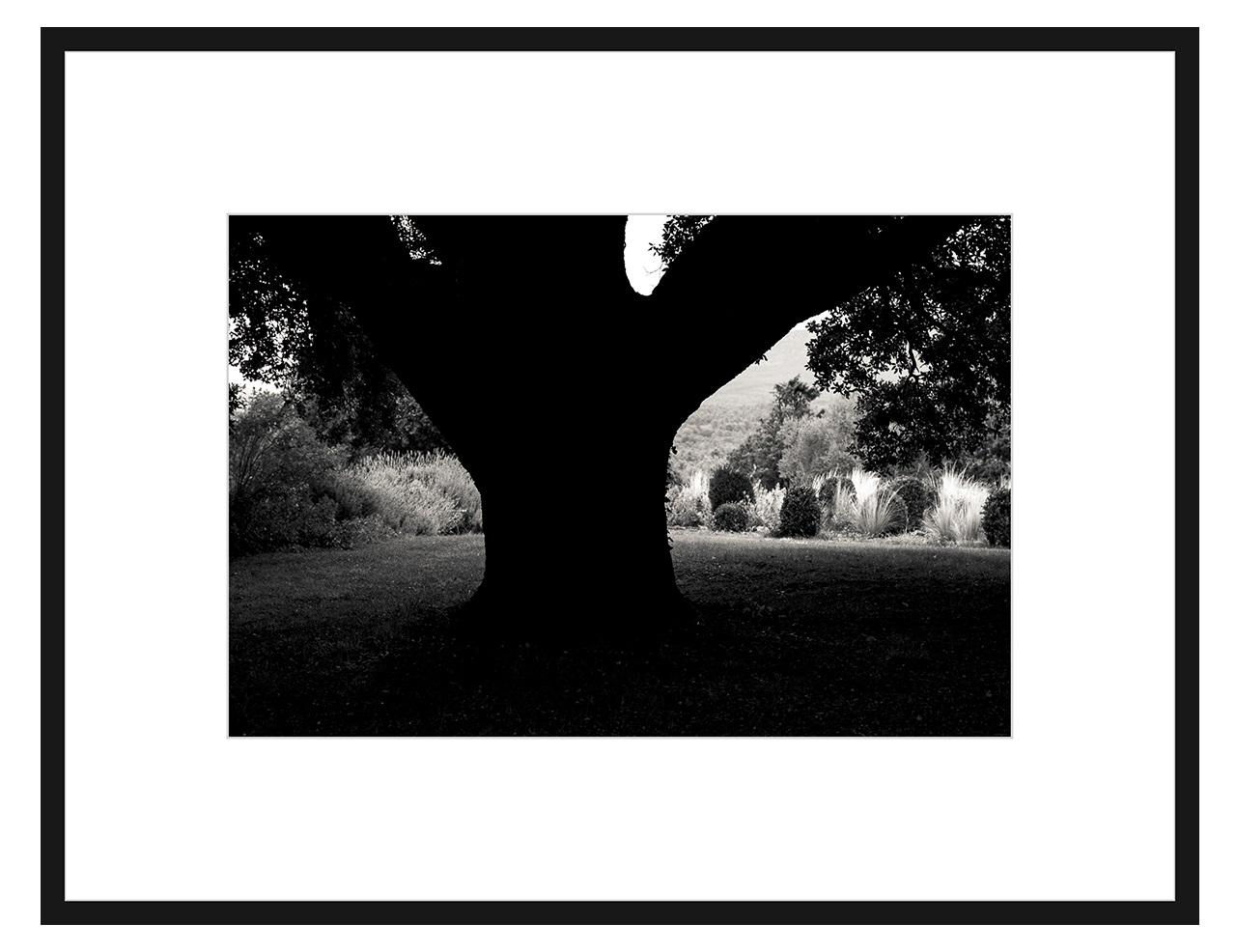 Авторская арт-фотография трилистник (george rouchin photography) черный 100x77 см. фото
