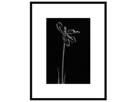 """Авторская арт-фотография """"Dead Tulip #4"""""""