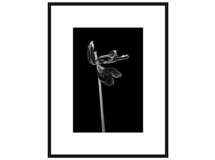 """Авторская арт-фотография """"Dead Tulip #5"""""""