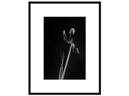 """Авторская арт-фотография """"Dead Tulip #6"""""""