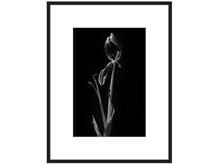 """Авторская арт-фотография """"Dead Tulip #8"""""""