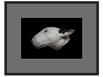"Авторская арт-фотография ""Bull Terrier #1"""