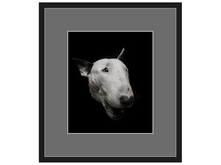 "Авторская арт-фотография ""Bull Terrier #2"""