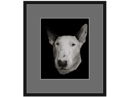 "Авторская арт-фотография ""Bull Terrier #6"""