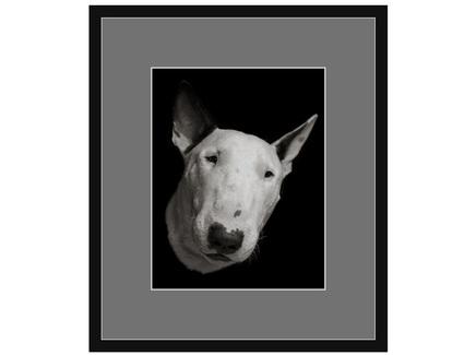 "Авторская арт-фотография ""Bull Terrier #7"""