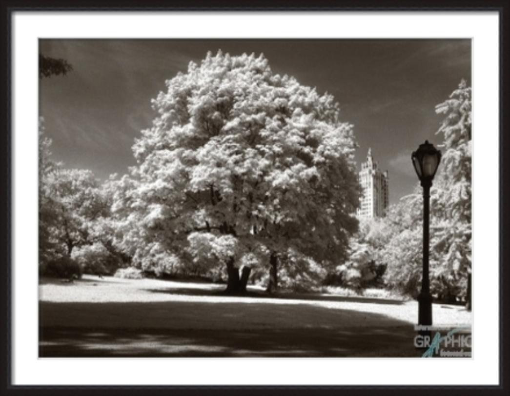 ПостерПостеры<br>Роскошное, ветвистое дерево в парке. Сквозь листву проглядывают небоскребы, напоминая, что за мирным идиллическим миром из полянок, дорожек и скамеек, жизнь бурлит и пышет энергией.<br><br>Material: Бумага<br>Width см: 134<br>Depth см: 4<br>Height см: 104
