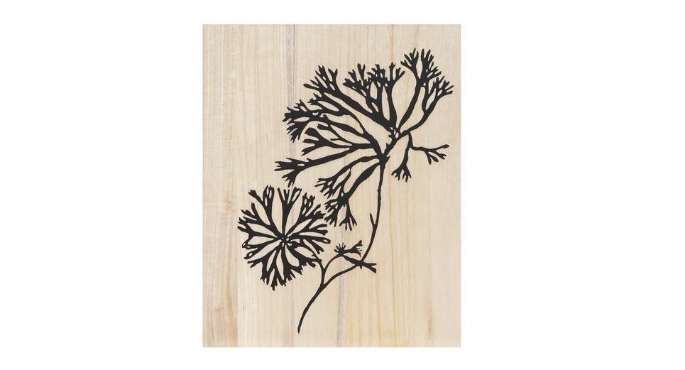 Картина Coral studyКартины<br>Легкость, ощущением которой пронизана картина &amp;quot;Coral Study&amp;quot;, может прийти и в ваш дом. С таким декором вы обеспечите оформлению любой комнаты больше изысканности. Нейтральные цвета позволят сочетать картину с интерьерами практически любой гаммы.<br><br>Material: Дерево<br>Width см: 40<br>Depth см: 4<br>Height см: 50