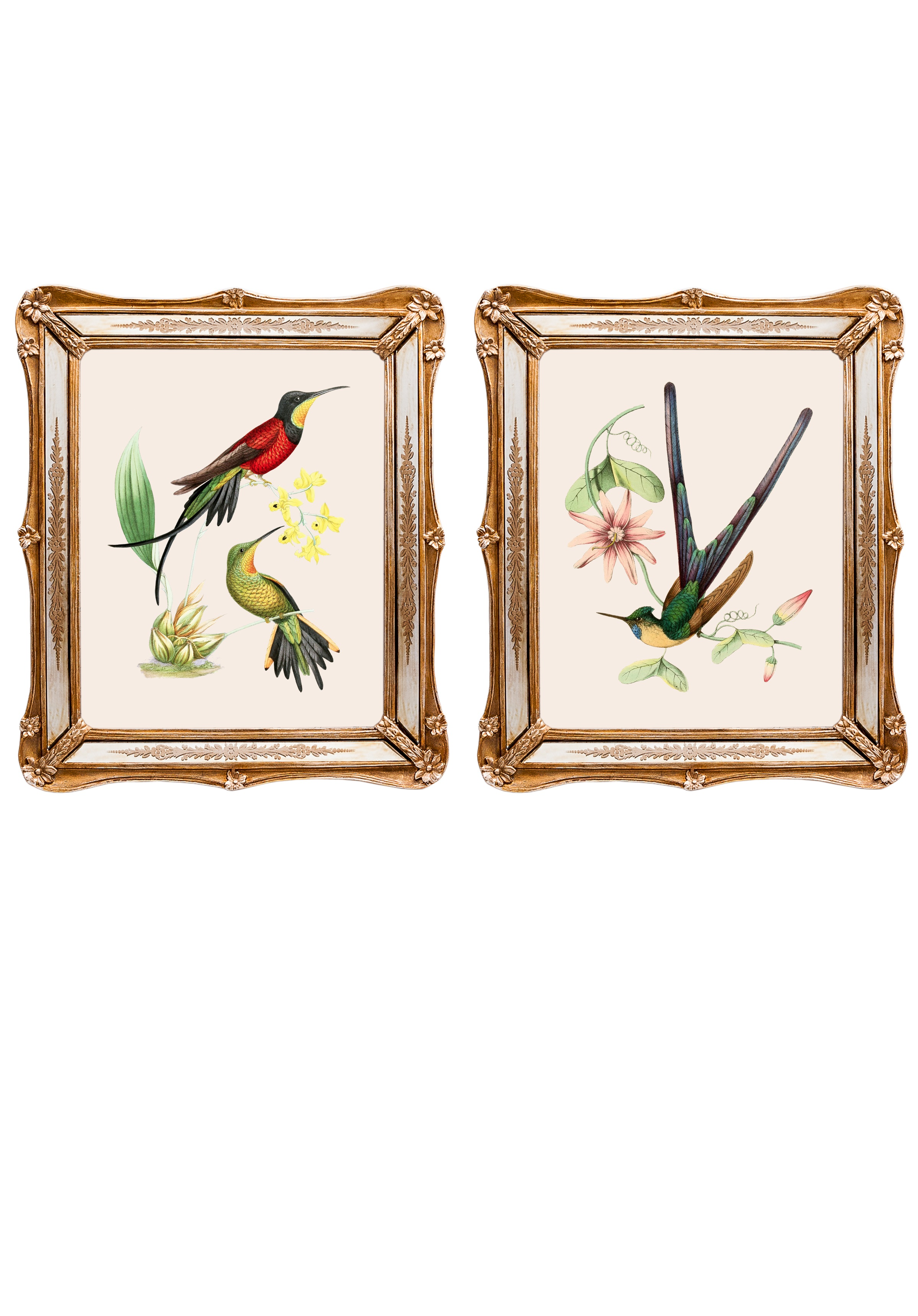 Набор из двух репродукций СофиКартины<br>&amp;lt;div&amp;gt;Репродукции акварелистов 19 века удовлетворят даже самый взыскательный вкус. Как очаровательны эти экзотические птицы! Красота оперения наталкивает на мысль, что это райские создания. Репродукции акварелей, обрамленные в великолепные рамы с зеркальными вставками, созданы удивлять и ежедневно дарить прекрасное настроение. Картины можно повесить на стену, а можно поставить, например, на стол или камин. Защитный стеклянный слой сохранит изображение от воздействий окружающей среды. Если Вам захочется обновить интерьер, Вы можете с легкостью заменить изображение картины!&amp;lt;/div&amp;gt;&amp;lt;div&amp;gt;&amp;lt;br&amp;gt;&amp;lt;/div&amp;gt;&amp;lt;div&amp;gt;Изображение - дизайнерская бумага; рама - искуственный камень, зеркальные вставки; защитный слой - стекло&amp;amp;nbsp;&amp;lt;/div&amp;gt;&amp;lt;div&amp;gt;цвет:мультиколор&amp;amp;nbsp;&amp;lt;/div&amp;gt;<br><br>Material: Бумага<br>Ширина см: 26<br>Высота см: 30<br>Глубина см: 2
