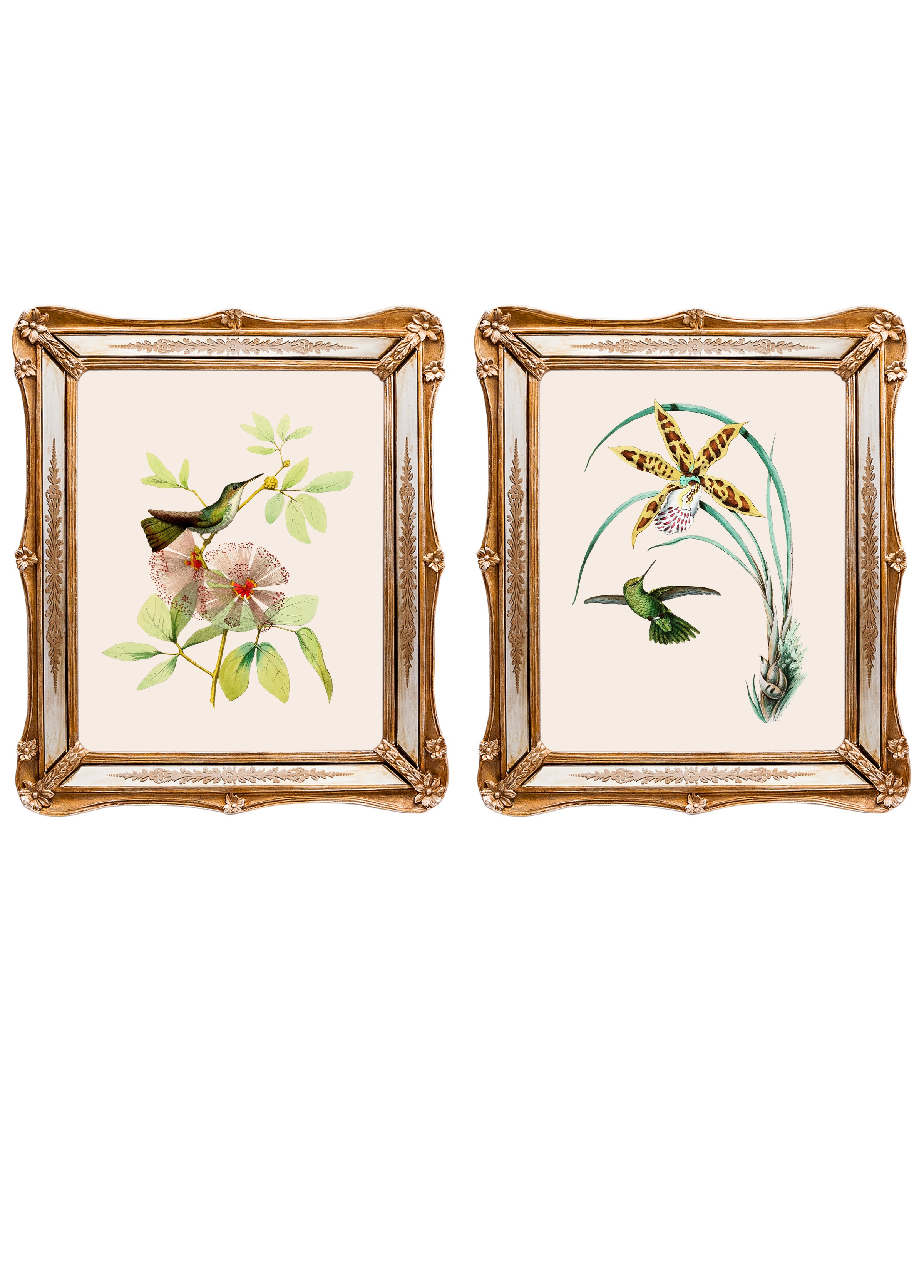 Набор из двух репродукций СофиКартины<br>&amp;lt;div&amp;gt;Репродукции акварелей 19 века с изображениями райских птиц наполнят атмосферу дома волнительными нотками прошлых столетий. На этих работах присутствует ореол романтики, теплоты, нежности. Репродукции акварелей в рамах с зеркальными вставками и золотым рельефом фантастически преображается в освещенном солнцем интерьере. Картины можно повесить на стену, а можно поставить, например, на стол или камин. Защитный стеклянный слой сохранит изображение от воздействий окружающей среды. Если Вам захочется обновить интерьер, Вы можете с легкостью заменить изображение картины!&amp;lt;/div&amp;gt;&amp;lt;div&amp;gt;&amp;lt;br&amp;gt;&amp;lt;/div&amp;gt;&amp;lt;div&amp;gt;Изображение - дизайнерская бумага; рама - искуственный камень, зеркальные вставки; защитный слой - стекло&amp;amp;nbsp;&amp;lt;/div&amp;gt;&amp;lt;div&amp;gt;цвет:мультиколор&amp;amp;nbsp;&amp;lt;/div&amp;gt;<br><br>Material: Бумага<br>Ширина см: 26.5<br>Высота см: 30.5<br>Глубина см: 2.0