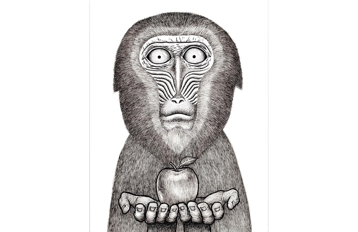 Картина Apple monkeyКартины<br>Яблочная обезьяна   - это уникальный вид обезьян, которые водятся только на PicPaint. Их серебристая шерсть имеет тонкий аромат свежего зеленого яблока, а их предпочтения в еде не сложно угадать. Привнесите в свой интерьер вкуса сочных яблок! А дружелюбная яблочная обезьянка угостит Вас любимым лакомством.Графические штрихи карандашом, сделанные   от руки  , придают картине оригинальность и уникальность. А что может быть лучше, чем уникальный подарок себе и своим близким!Современная и неординарная яблочная обезьяна уже спешит к Вам в гости!<br><br>Material: Холст<br>Width см: 50<br>Height см: 70