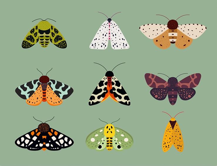 Картина Будни энтомологаКартины<br>Любите смотреть на бабочек, возиться с жучками и открывать новые виды насекомых? Да Вы настоящий энтомолог!<br>Энтомология  - раздел зоологии, изучающий насекомых. <br>Список энтомологов огромен, и включает таких крупнейших биологов, как Чарлз Дарвин, писатель Владимир Набоков, Карл Фриш (Нобелевский лауреат 1973 года) и дважды лауреат Пулитцеровской премии профессор Эдвард Уилсон. Так что не стоит недооценивать значимость этой важной науки! <br>А если Вы больше любите просто посидеть в парке и посмотреть на танец бабочек над цветами, то картина   Будни энтомолога   станет неплохой альтернативой в холодные зимние дни.<br><br>Material: Холст<br>Width см: 70<br>Height см: 50